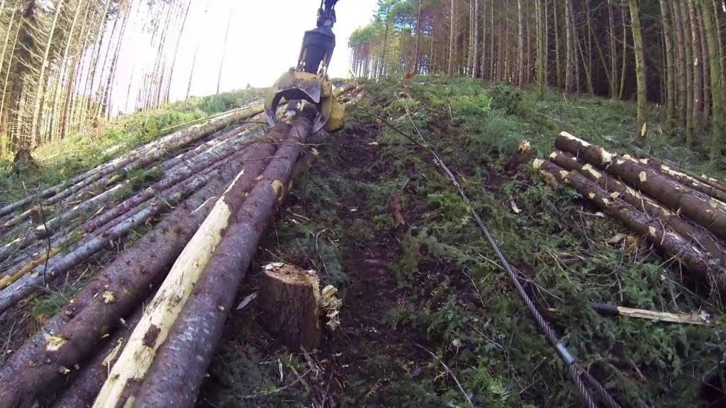 Как бесплатно получить лес на строительство дома в 2021 году: правовые нормы, особенности, документы